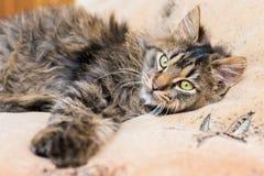 基于在bedroom_的床的一只幼小蓬松猫 免版税库存照片
