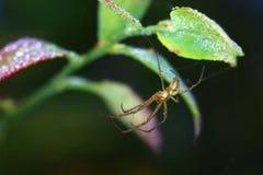 基于它在早晨露水的蜘蛛` s网 免版税库存照片