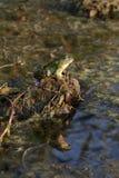 基于小丘的青蛙和甲虫 库存照片