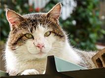 基于屋顶的成人猫 免版税图库摄影