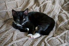 基于床投掷的黑白困猫 免版税库存图片