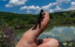 基于拇指的蝴蝶在池塘附近 库存图片