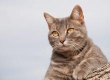 基于日志的蓝色平纹全部赌注猫 免版税库存图片