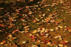 基于春天池塘的秋天叶子 免版税库存图片