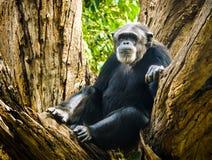 基于树的猴子 库存照片