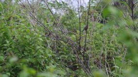 基于植物射击的小的鸟 影视素材