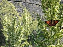 基于植物的美丽的蝴蝶 免版税图库摄影