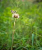基于植物的蝴蝶 免版税库存图片