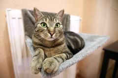 基于沙发的一只镶边猫 库存照片