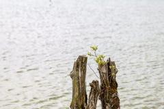基于波兰湖 免版税库存照片