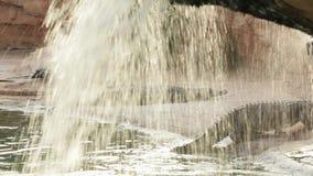 基于瀑布的岸的鳄鱼 股票视频