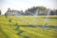 基于灌溉轮子线的鹰 库存照片