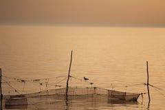 基于网的鸟海鸥 库存图片