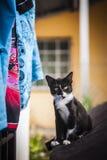 基于老长沙发的小猫 免版税库存图片