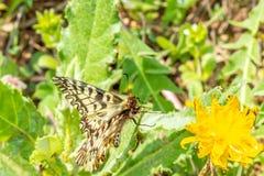 基于花的蝴蝶的宏观摄影 免版税库存图片