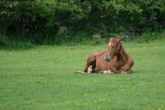 基于草甸的马 库存图片