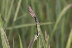 基于词根的蜻蜓 库存图片