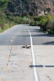 基于路的鸭子在上部纽波特海湾生态储备 库存照片