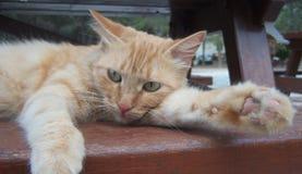基于长凳的懒惰猫 免版税库存照片