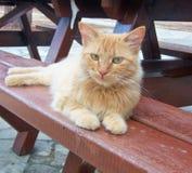 基于长凳的猫 免版税库存照片