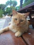 基于长凳的猫 库存照片