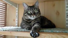 基于阳台的美丽的绿眼的猫 喜欢晒日光浴 另一方面看得有点怯懦,但是做与他的爪子的按摩 股票视频