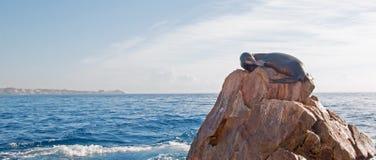"""基于""""the Pointâ€土地Los卡约埃尔考斯End† 或""""Pinnacle的加利福尼亚海狮在Cabo圣卢卡斯在巴哈墨西哥 免版税图库摄影"""