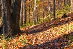 基卡普国家公园伊利诺伊 免版税库存图片
