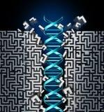 基因研究成功 免版税库存照片