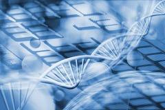 基因链子的图象在键盘背景的 免版税图库摄影