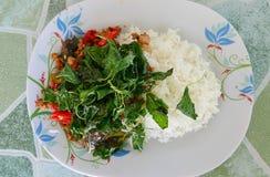 基本的食物泰国,蓬蒿 免版税库存照片
