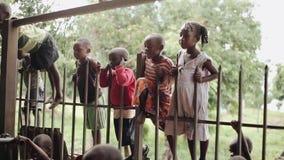 基苏木,肯尼亚- 2018年5月21日:小组小非洲孩子在篱芭站立外面 男孩和女孩在操场 股票视频
