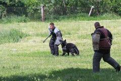基辅,乌克兰- 2016年6月05日:一条服务狗的训练在的 免版税库存照片