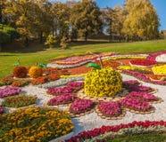 基辅,乌克兰- OCTOBER11 :Chrysanthemumsr展示风景公园我 库存图片