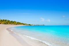 基韦斯特岛佛罗里达Smathers海滩棕榈树美国 免版税库存照片