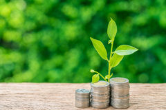堆与成长新芽植物的硬币当企业财务或g 库存图片