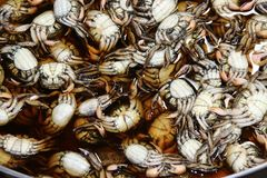 堆与盐的被保存的螃蟹在咸水中 米德尔美洲红树螃蟹,爪是红紫 免版税库存图片