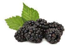 堆与绿色的成熟黑莓离开(隔绝) 免版税库存图片