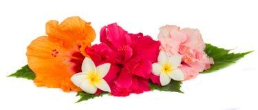 堆五颜六色的木槿花 库存照片