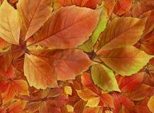 堆五颜六色的秋天离开背景 库存照片