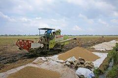 堆他们的被收获的米的农夫,在印度 免版税库存图片