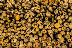 堆做的纹理新伐木头 免版税库存图片