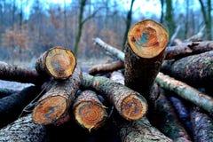 堆击倒的树,一个小组树干,照片 库存照片