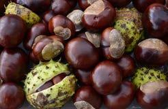 堆发光的欧洲七叶树果子 免版税库存照片