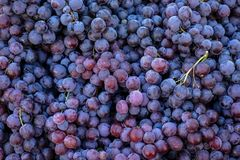 堆可口新水多的无核的红葡萄背景在城市水果市场上 图库摄影