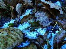堆在下落的叶子中的冰雹石头 免版税图库摄影