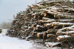 堆在丹麦自然保护的木头 库存图片
