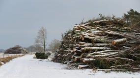 堆在丹麦自然保护的木头 免版税库存照片
