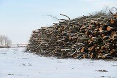 堆在丹麦自然保护的木头 免版税库存图片