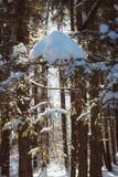 堆在云杉的分支的雪在冬天森林里 免版税库存照片